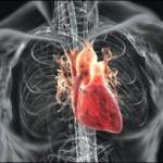 Human-Heart-300x204